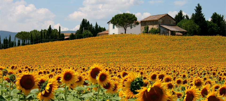 Voyage culturel en Ombrie: Le cœur vert de l'Italie. Du 12 au 19 avril 2020